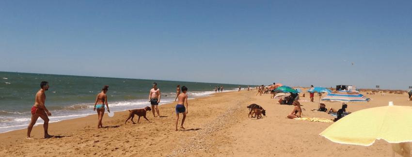 playa para perros el espigon huelva