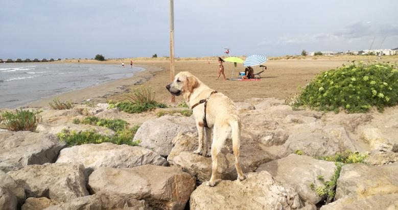 Playa para perros Les Salines en Cubelles