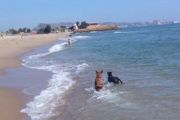 Playa para perros en Cullera El Brosquil