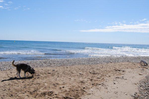 Playa para perros en Alcossebre Castellón