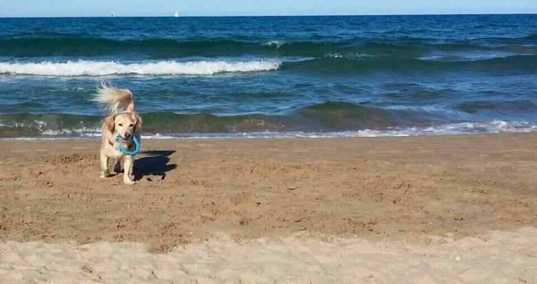 Playa can , playa para perros en Gandia